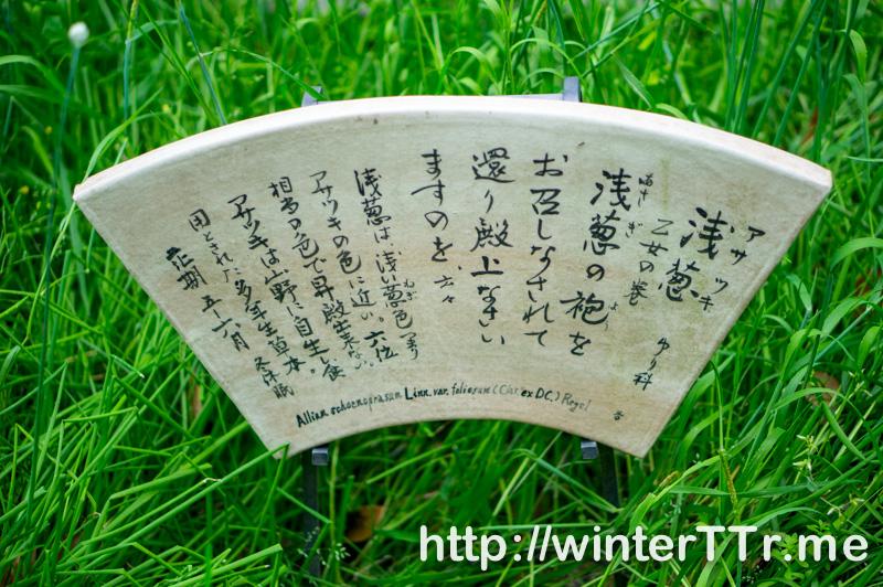 0501-jonangu-asatsuki.jpg