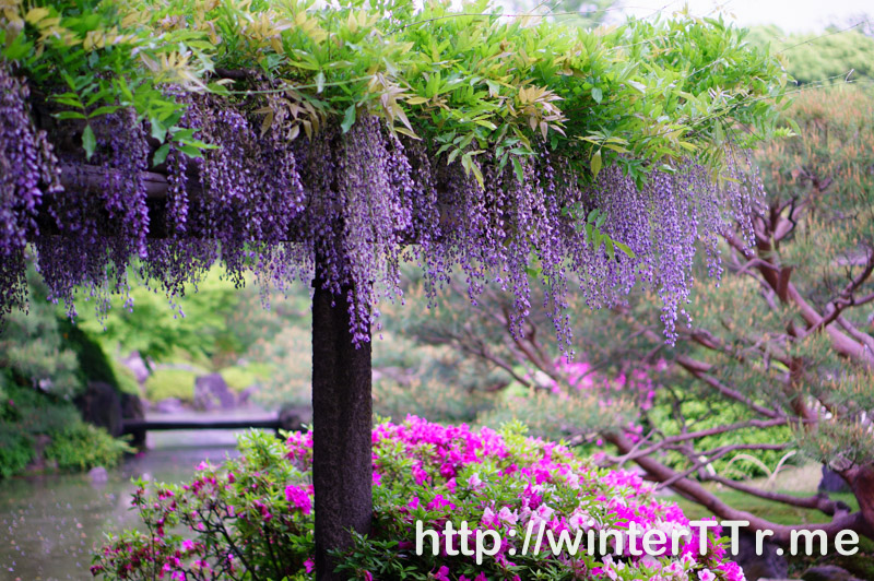 0501-jonangu-purple.jpg