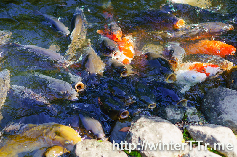 0504-nara-fish.jpg