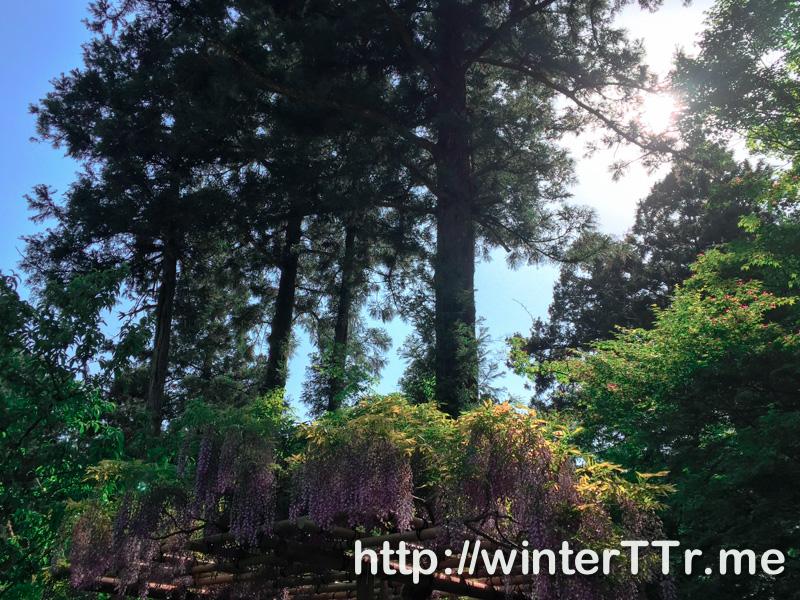 0504-nara-tree.jpg